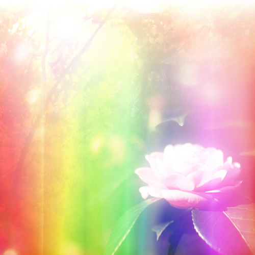 iPad_flower.jpg